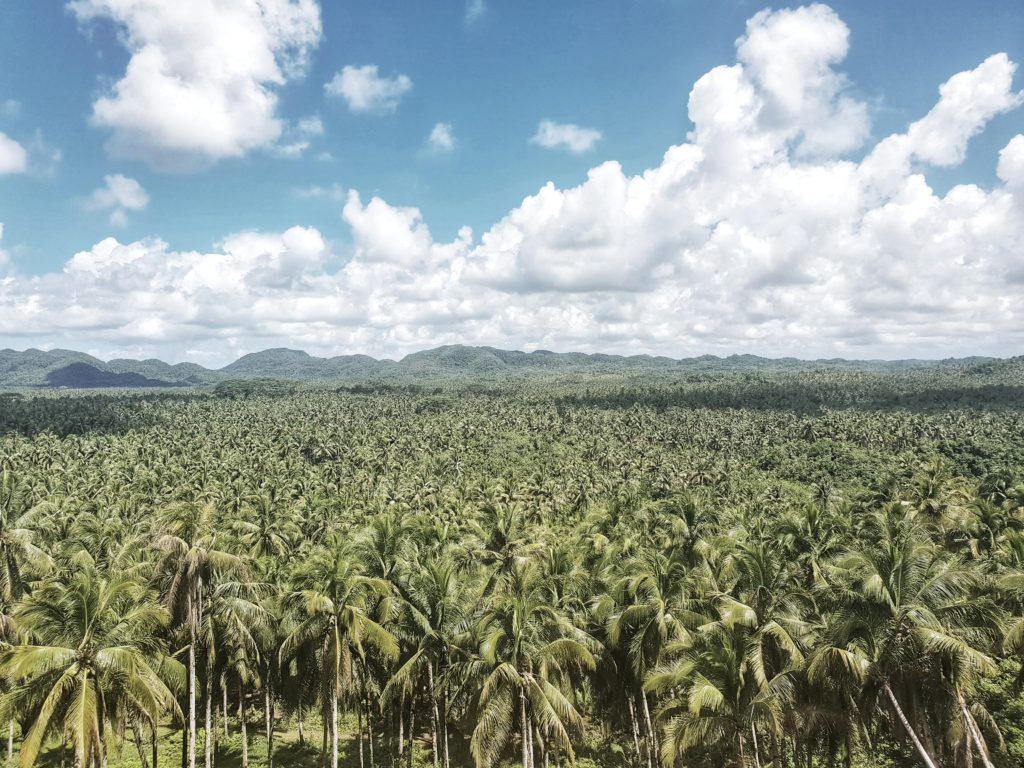 siargao, palm tree lookout