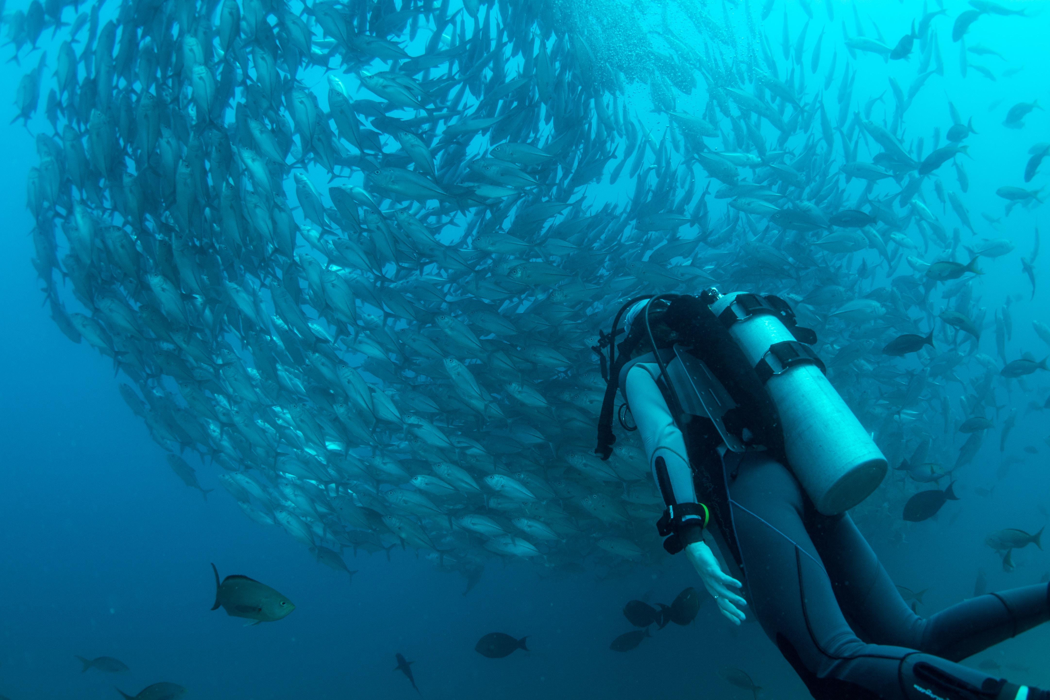 Scuba diving in Bohol