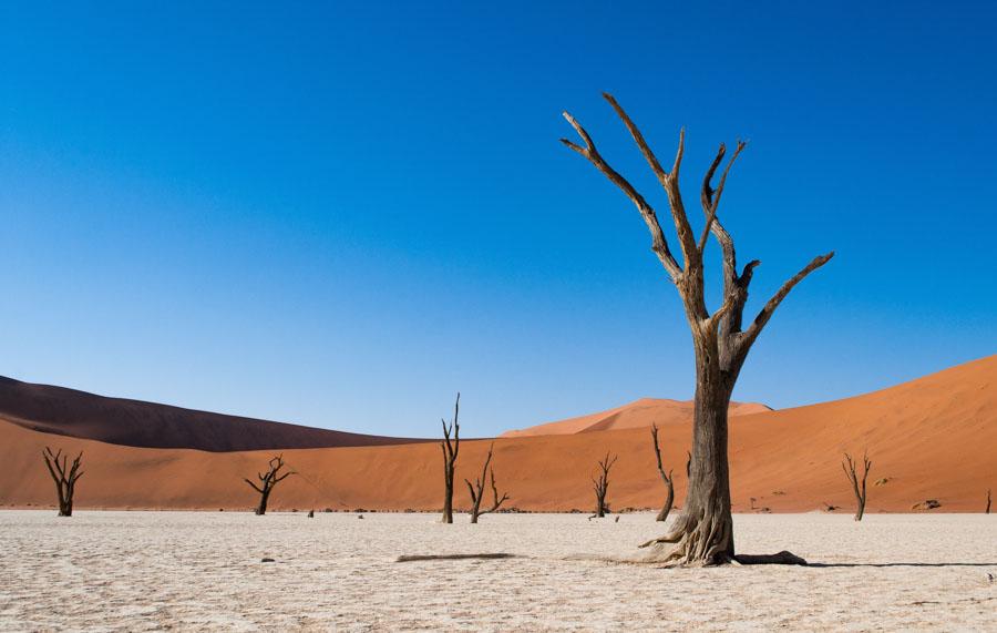 Deadvlei-Nambia-Desert-Dead Trees